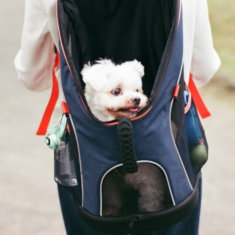 Choosing the Right Backpack for Your Dog